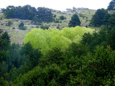 Thasso's rich nature environment