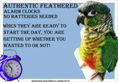 Training Your Pet Parrot Parrot Pet, Parrot Toys, Parrot Bird, Parrot Quotes, Bird Quotes, Funny Birds, Cute Birds, Diy Bird Toys, Feathered Dinosaurs
