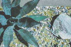 poems is under construction Venice Beach, Plant Leaves, Poems, California, Plants, Poetry, Verses, Plant, Poem