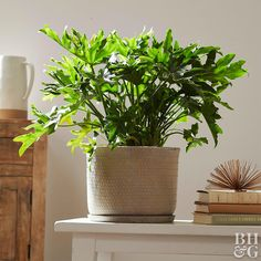 Monstera and Split-Leaf Philodendron: Is There a Difference Between the Two? Monstera and Split-Leaf Philodendron: Is There a Difference Between the Two? Air Plants, Indoor Plants, Indoor Gardening, Indoor Orchids, Gardening Books, Container Gardening, Gardening Tips, Terrarium Plants, Gardens