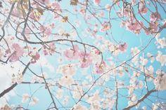 "hoshikari: "" April 7, 2013 by wataamee (edited by hoshikari) """