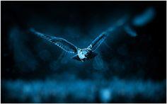 Night Owl Bird Flying Wallpaper | night owl bird flying wallpaper 1080p, night owl bird flying wallpaper desktop, night owl bird flying wallpaper hd, night owl bird flying wallpaper iphone