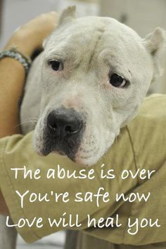 Love will heal you ♥ it's not always a happy ending ! keep your pets safe indoors !