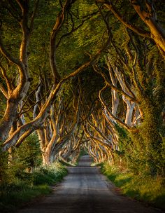 The Dark Hedges are an avenue of beech trees that are a couple of hundred years old in Armoy, Co. Antrim. The trees intertwine in the middle of the road giving the scene a magical ethereal look. This location has been used as a location for the TV Show Game of Thrones.    I shot this image at sunrise just as the sun came up and lit the side of the trees with warm early morning light.  Limited edition prints are available.    - Bryan Hanna Irish Landscape Photography