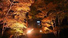 【動画】ライトアップされた「もみじのトンネル」をゆく叡山電鉄鞍馬線=戸村登撮影