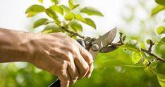Предлагаем вам таблицу со сроками обрезки 9 видов плодовых деревьев, которые можно встретить во фруктовом саду.