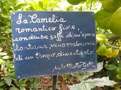 Una pianta romantica...