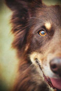 Yapılan araştırmalara göre köpekler, hayvanlar içerisinde yüzünüze bakarak mutlu, kızgın, korkmuş ve üzüntülü olduğunuzu anlayabilen tek hayvandır. #köpek #köpekaksesuarları #mobilpetshop