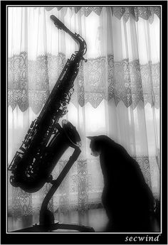 Sax and cat