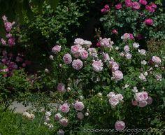 A Rose is a Rose...: April 2014