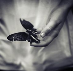 Black and white photo with butterfly