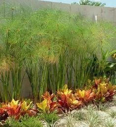 Jardines de estilo moderno por EcoEntorno Paisajismo Urbano Tropical Garden, Tropical Plants, Backyard Patio, Backyard Landscaping, Florida Landscaping, Hedges, Garden Projects, Beautiful Gardens, Landscape Design