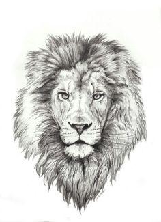 Izu The Lion Tattos Pinterest Lion Face Drawing Pencil