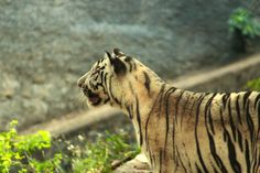 Independence, Perseverance and Strength by Saikanth Dacha on 500px