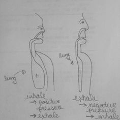 Awful pic, but this is how I remember pressure gradients in lungs per inspiration/exp. #physiology