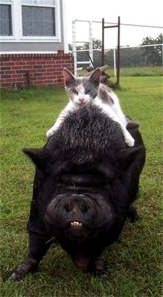 """Kitty-Cat:  """"I'm just having a 'Piggy-Back' ride!""""    ♥"""