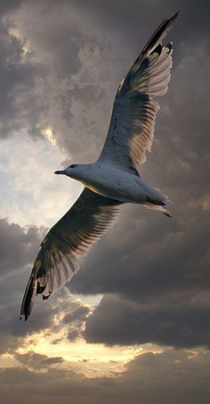 """You have the freedom to be yourself, your true self, here and now, and nothing can stand in your way."" Jonathan Livingston Seagull (Richard Bach) MY HERO. Pretty Birds, Love Birds, Beautiful Birds, Animals Beautiful, Photo Animaliere, Tier Fotos, Mundo Animal, Sea Birds, Bird Art"