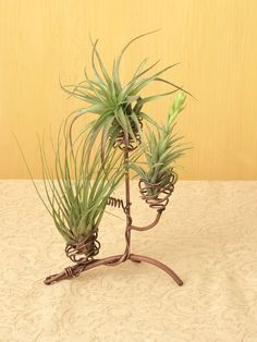 Air Plant Holder Tree - Air Plant Stand by Ancient Grafitti