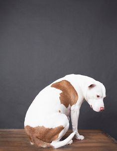 Great photo series on rescued dogs from Detroit.....Detroit, pit bull, fine art dog photography, home decor fine art photography,gray, white, brown minimalistic, dog photography. $25.00, via Etsy.