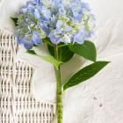 Heavenly Hydrangeas | Midwest Living