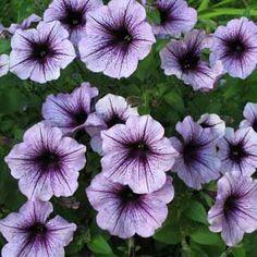 Colorful Flowering Plants for Shade Gardens - Empress of Dirt Flowering Shade Plants, Shade Garden Plants, Goat Pen, Shade Flowers, Garden Nursery, Can Lights, Plant Needs, Colorful Flowers, Gardening Tips