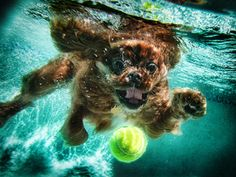 "Seth Casteel has made a living photographing man's best friend. Though he snaps pictures of other animals as well, his ""Dogs Underwater"" photos have captivated audiences and have since gone viral. The award-winning photog has been featured on ""EXTRA,"" ""JEOPARDY!"" and in publications such as Dog Fancy Magazine, Dog World and Popular Dogs."