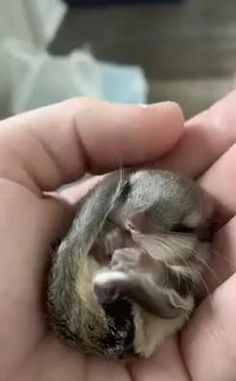 Baby Animals Super Cute, Cute Little Animals, Cute Funny Animals, Cute Cats, Big Cats, Cute Animal Videos, Cute Animal Pictures, Cute Creatures, Animals And Pets