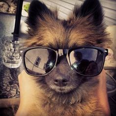One Cool Pup. Click to view: 25 Animals Who Are Stoked For Summer!