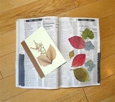 phone books make the best flower presses and more tips on drying ornamental plants