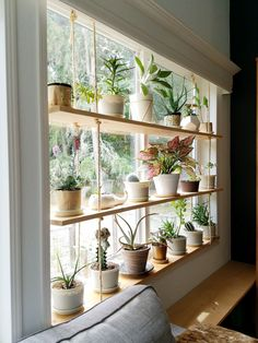 Hanging Plant Shelves – The Artful Roost Hanging Plant Shelves – The Artful Roost Plantas Indoor, Window Plants, Balcony Plants, Indoor Window Planter, Diy Hanging Shelves, Ceiling Hanging, Hanging Plant Diy, Hanging Plants On Fence, Ceiling Shelves