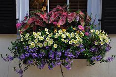 Charleston - Flower Box 1 | Flickr - Photo Sharing!