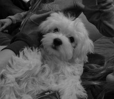 Furry little pup