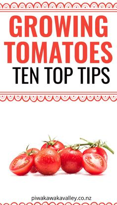 Growing the best tomatoes does not just involve throwing a few seeds in the ground, giving them water every few days and hoping for the best.Here are 10 top tips to help you grow the best tomatoes from home.