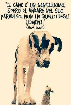 FbSocialPet: social network per cani, gatti, cavalli, tutti gli animali