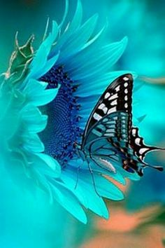 Butterflies ... So beautiful