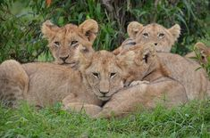 7 Luxury Travel Destinations: KENYA
