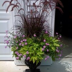 .container plants