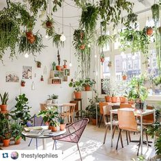 And my obsessional love affair for anything green living and breathing continues ...... Thx to @thestylephiles for the inspo xx #styleinspo #greenwall #foliagerocks #canneverhaveenoughgreen