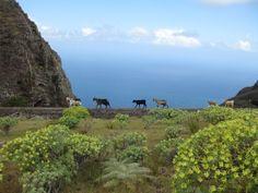 The beautiful landscape of La Gomera Tenerife, Beautiful Landscapes, Destinations, Spaces, Mountains, Happy, Nature, Travel, Animals