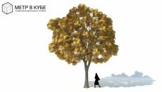 3D Model of Low poly 3d tree fall autumn (035)