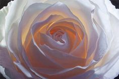 Creation V - Print of white rose