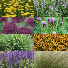 Small Gardens, Outdoor Gardens, My Secret Garden, Landscaping Plants, Garden Art, Beautiful Gardens, Container Gardening, Gardens