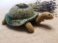 Oh, Aunt Jody, we are doing the Galapagos in late Feb / March...  ;)