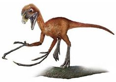 Epidendrosaurus, a bird-like dino with a finger twice as long as the rest to help dig for insects