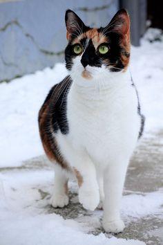 Trixie in the snow by Rima-Deer.deviantart.com on @deviantART