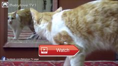 😸 Funny Cats Compilation Best Funny Cat Videos Ever 😼 😽 from Pet Lovers 😻