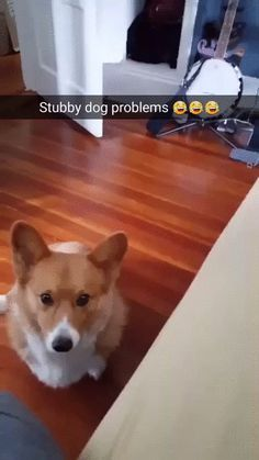 Cute corgi trying to give a high five.  His little dog legs are just too short XD.  Dogos are the best.