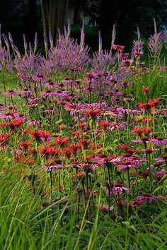 Echinacea, Monarda, Veronicastrum. Would sub in Sidalcea, phlox astilbe, delphinium, for the veronicastrum in back