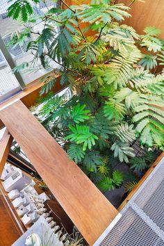 4.5mくらいまで育ったこの木はエバーフレッシュというインドネシアのネムの木の一種。 Tiny House Design, Green Life, Cafe Bar, Garden Landscaping, Indoor Plants, House Plants, Landscape, Inspiration, Gardening