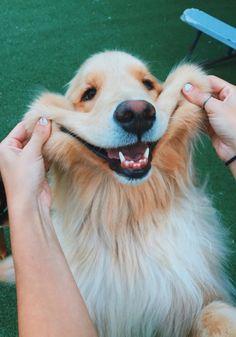 Dog pictures: cute and funny pictures of dogs - puppies .-Hundebilder: Süße und lustige Bilder von Hunden – puppies – Dog pictures: cute and funny pictures of dogs – puppies – - Super Cute Puppies, Cute Baby Dogs, Cute Little Puppies, Cute Funny Dogs, Cute Dogs And Puppies, Cute Funny Animals, Cute Baby Animals, Doggies, Funny Pets